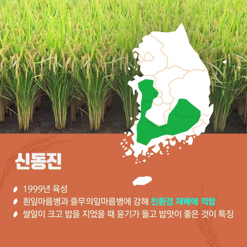 쌀이미지 4
