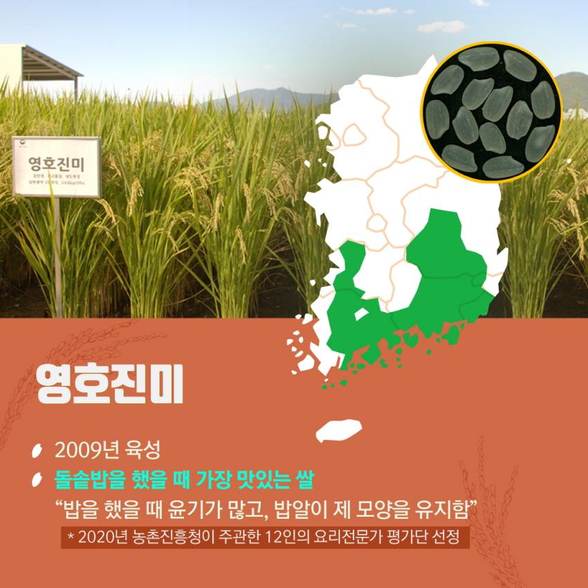 쌀이미지 6